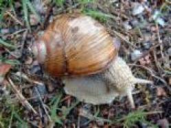 Cover art for Death of a Snail